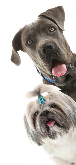 spalla-cani-erba-sintetica-02
